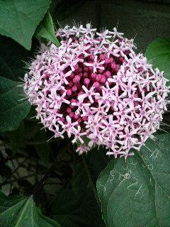 この花なんて名前?