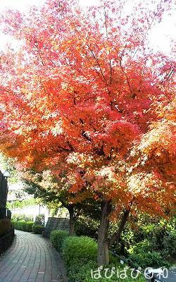 真っ赤な紅葉。