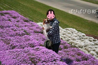 プチ★お花畑