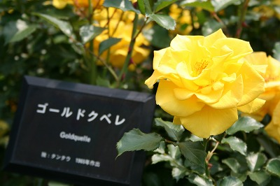 薔薇が咲いた★★