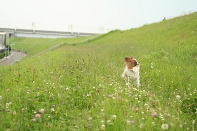 ぱぴとお散歩