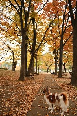 公園の秋★★