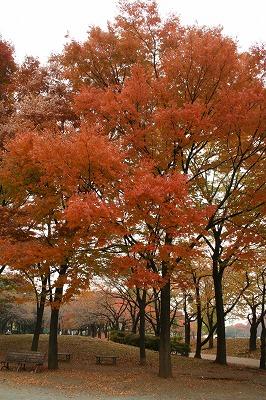 公園の秋★