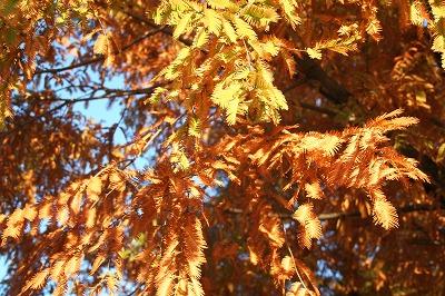 オレンジ色の木々☆☆