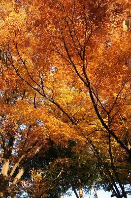 オレンジ色の木々☆