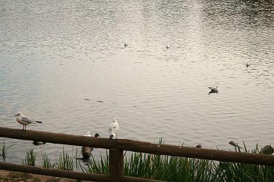 水辺の鳥達