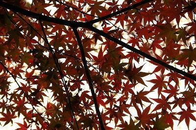 紅葉が少し赤く・・・