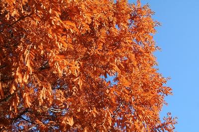 オレンジの葉