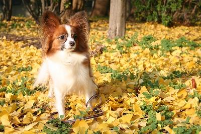 黄金色の絨毯★