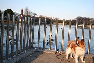 公園の散歩も3年目。