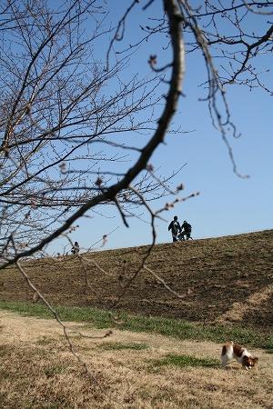 桜の蕾と土手