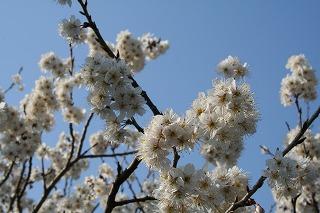 春ちかし・・・
