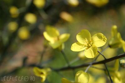 黄色の花って好きだわ。