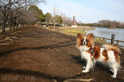 公園にて ぱぴ。