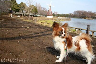 冬の公園・・・