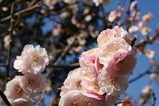 これは・・・桜?