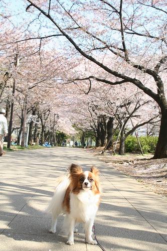 桜並木で・・・
