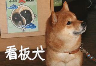 看板犬 ぽんちゃん