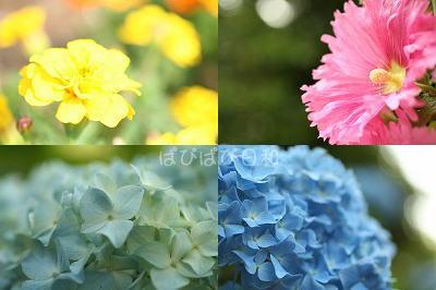 公園で見つけた花達