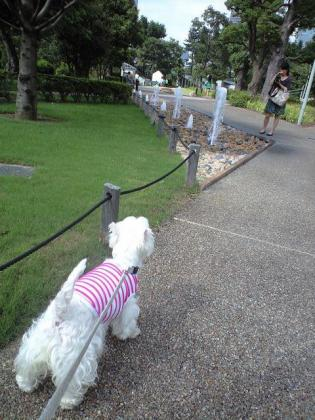お散歩①.JPG