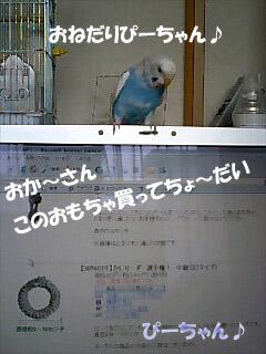 p018.jpg