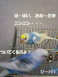 p151.jpg