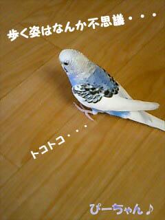 p366.jpg