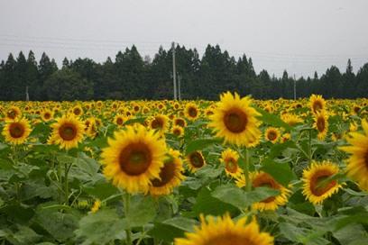 himawari2WM.jpg