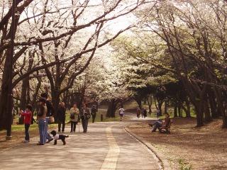 根岸森林公園02