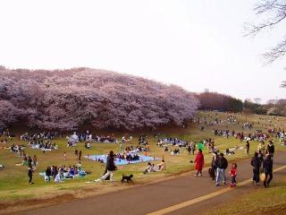 根岸森林公園01