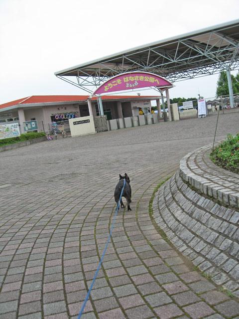 はなさき公園