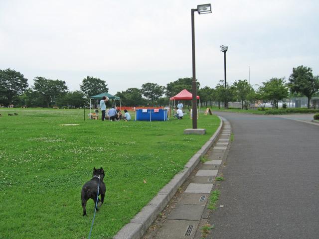 はなさき公園  (2)