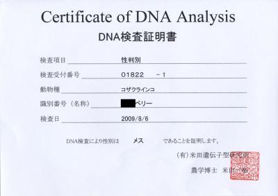 DNA検査証明書ベリー
