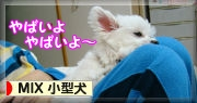 MIX小型犬へ