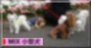ブログ村  MIX小型犬へ