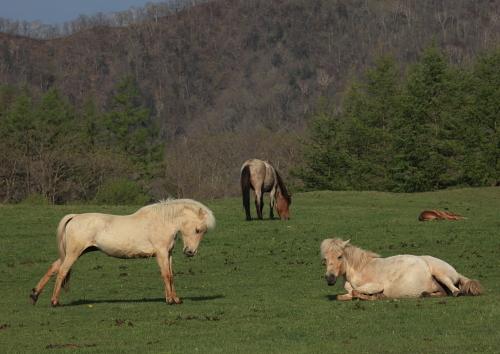 horse1101