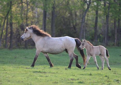 horse1105