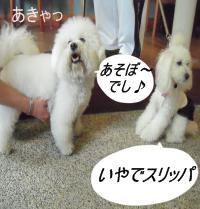 10_20090603225814.jpg