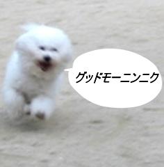 43_20090605002726.jpg