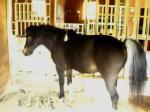 pony05.jpg