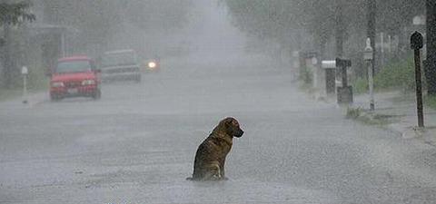 寂しい、雨。。。
