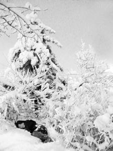 snow_01.jpg