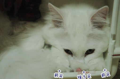 01_20090510225635.jpg
