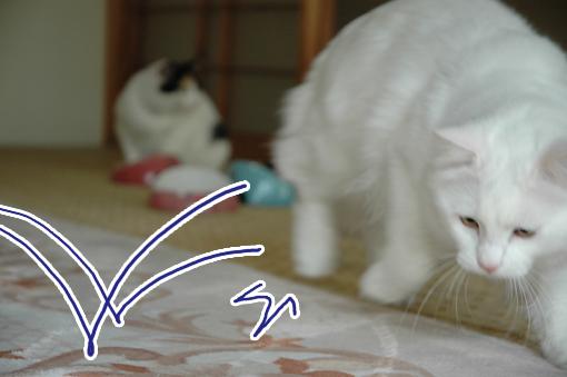 01_20090529010417.jpg