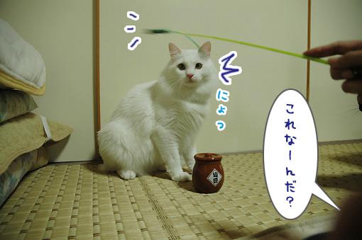 01_20090823233125.jpg