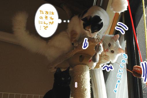 02_20090129164453.jpg