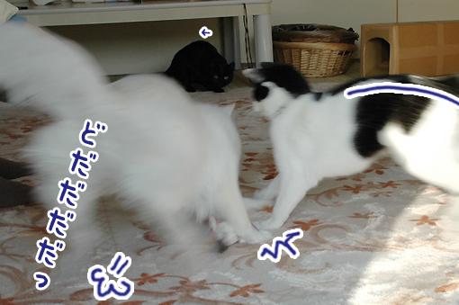 02_20090227172433.jpg