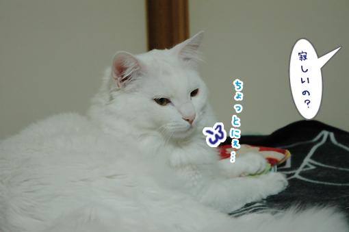02_20090301203036.jpg