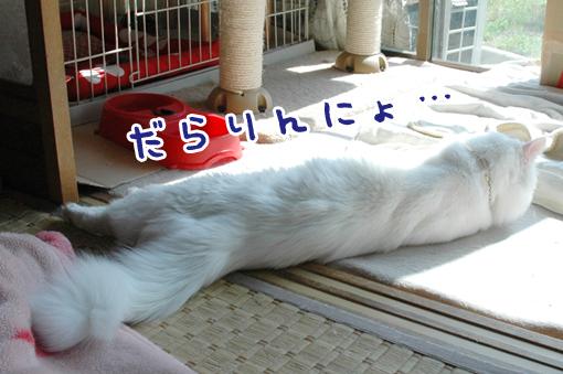 02_20090328010547.jpg