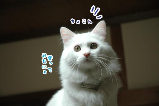 02_20090402012545.jpg